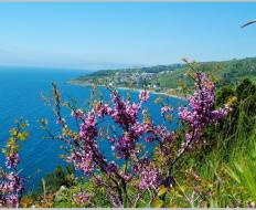 Крым Весной Автопрокат